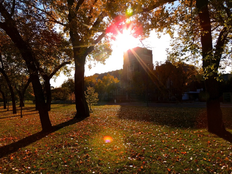 college-avenue-sunshine