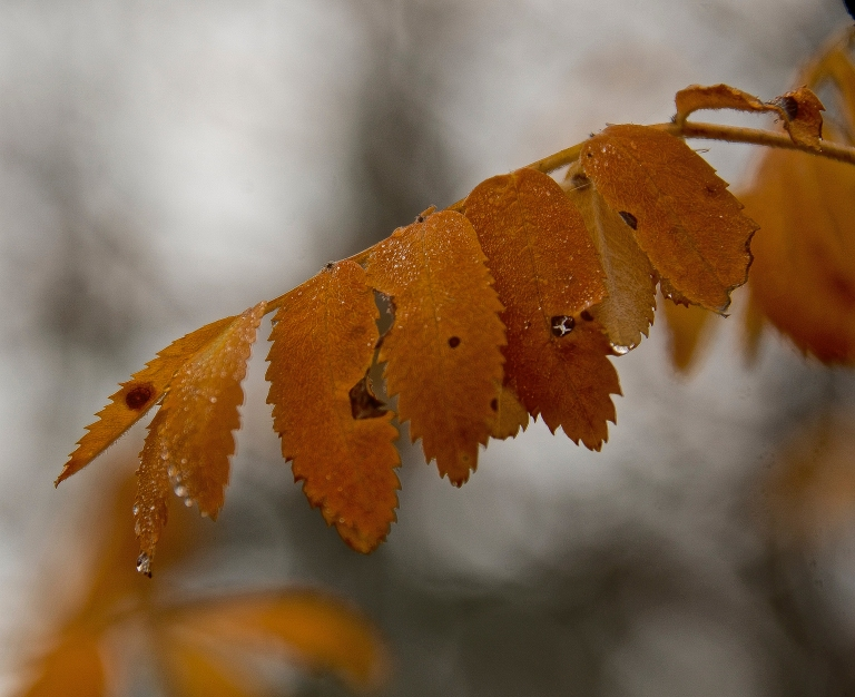 colourful-leaves-on-a-grey-day