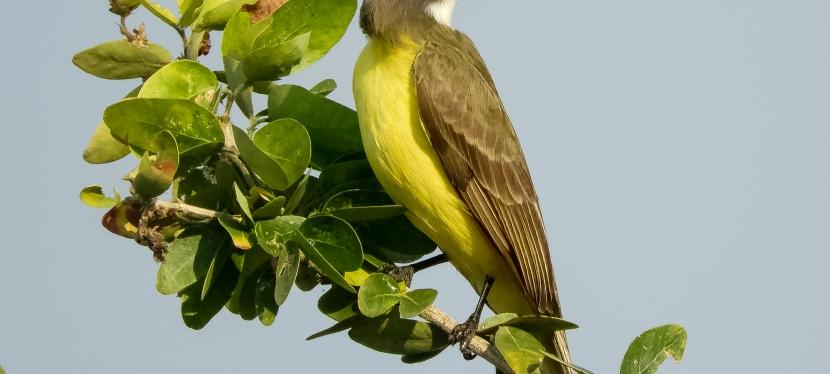 tropical kingfisher?