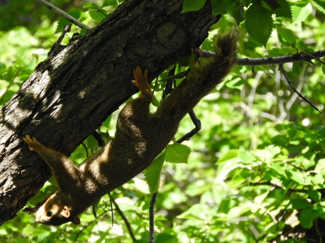 squirrel in the shade.jpg