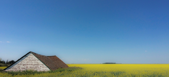 roof amongst canola