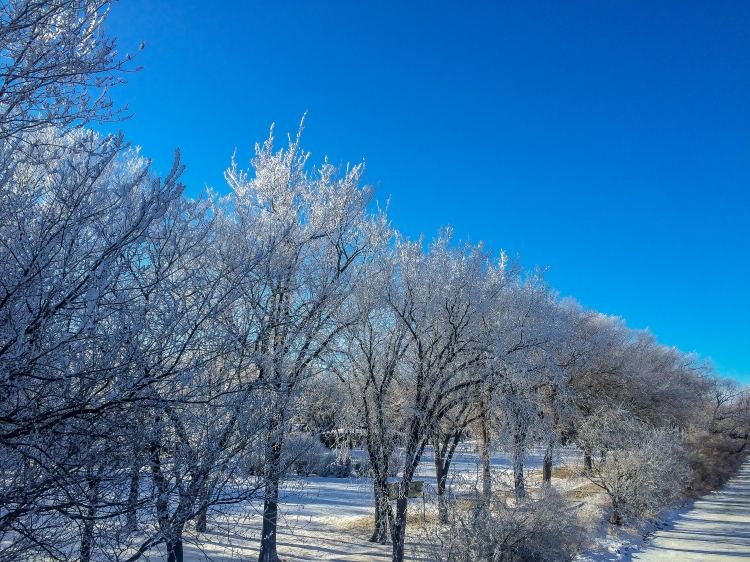 Sunday afternoon hoar frost 2